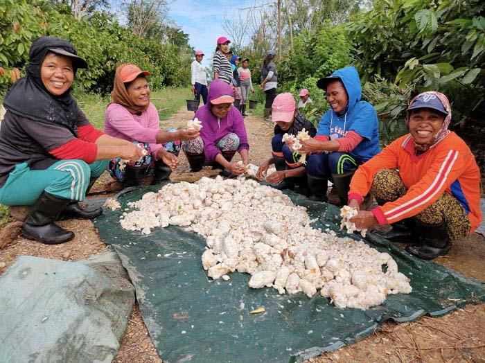 Mondelez dan OFI Berkolaborasi Untuk Ciptakan Pertanian Kakao di Pulau Seram