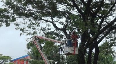 Damkar Kota Ambon Menebang Pohon, Antisipasi Dampak Curah Hujan dan Angin Kencang